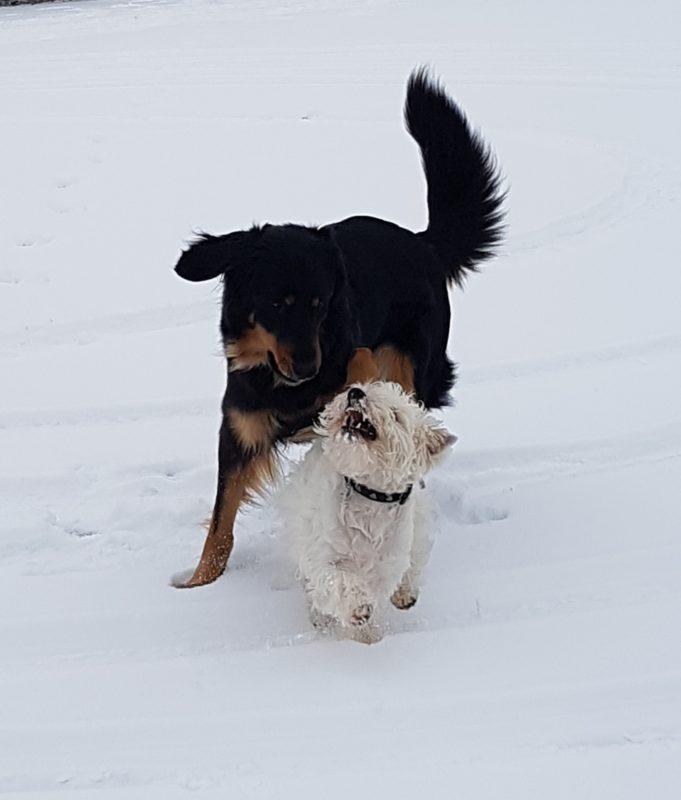 Jolly Jumper met Oliver in de sneeuw