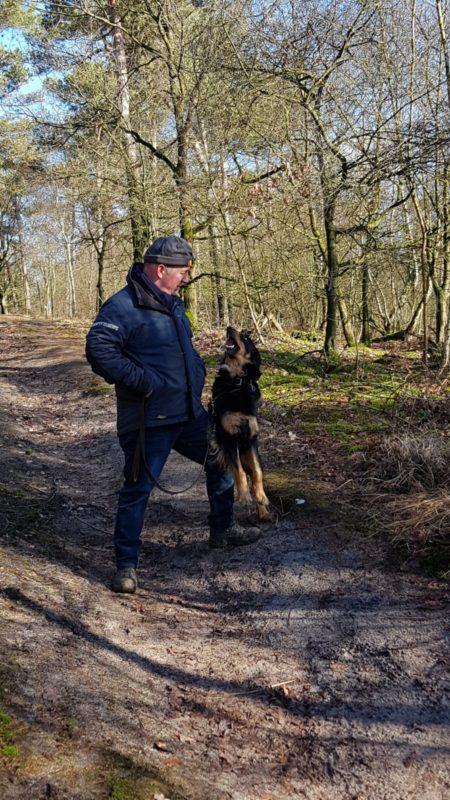 Samen wandelen met Jolly in het bos